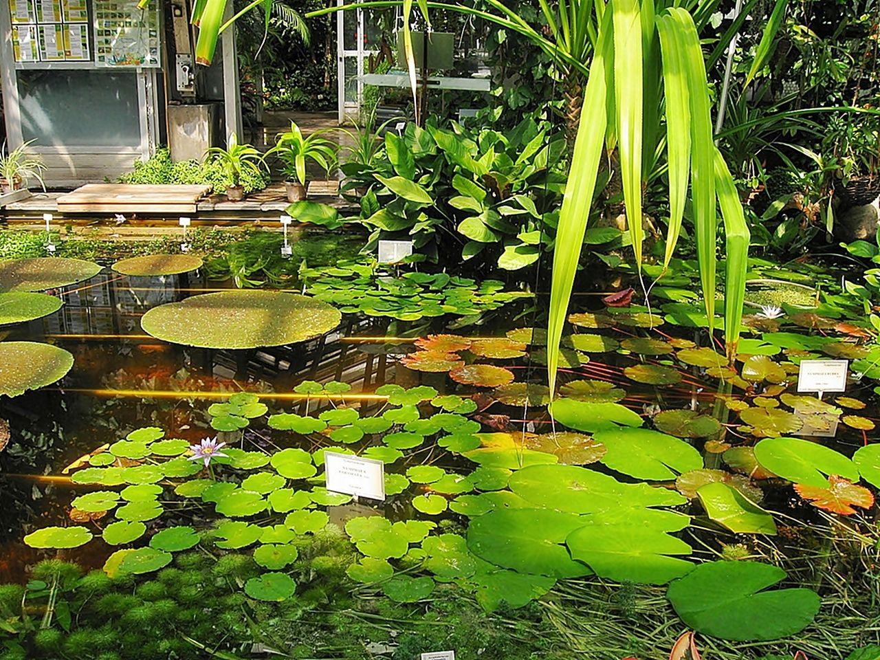 Ogród botaniczny/Magdalia25/Wikimedia
