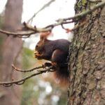 dzikie zwierzęta w krakowie i rezerwatach
