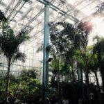 krakowski ogród botaniczny i kolekcja palm